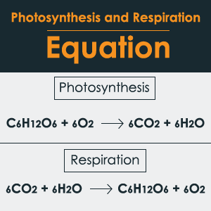 Photosynthesis and Cellular Respiration Equation