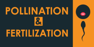 Pollination vs Fertilization