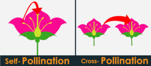 Self-pollination and Cross-pollination