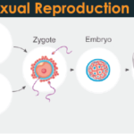 Sexual Reproduction and its Types