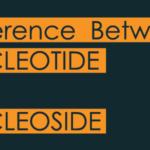 nucleotide vs nucleoside-01-min