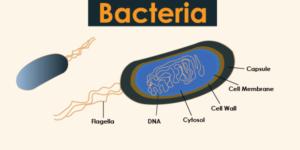 What are prokaryotes
