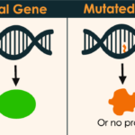 What is Gene Mutation