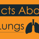 Facts About Lungs