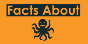 Facts About Octopus