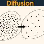 diffusion in biology