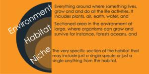 Habitat vs Niche