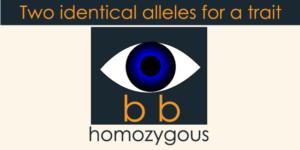 Homozygous
