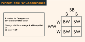 codominance punnet table