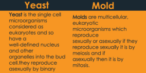 Yeast vs Mold