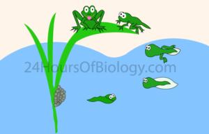Definition of Reptiles vs Amphibians