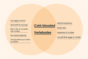Reptiles vs Amphibians Venn Diagram