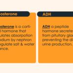 ADH vs Aldosterone