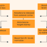 Difference Between Vasopressin and Aldosterone