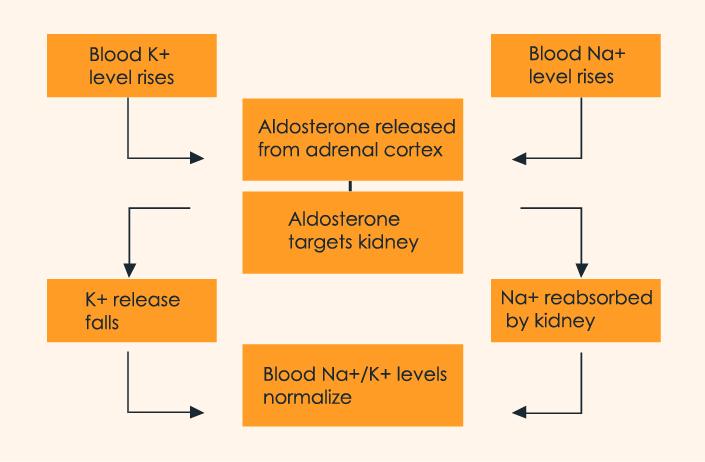 Difference Between Vasopressin and Aldosterone