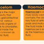 Hemocoel vs Coelom