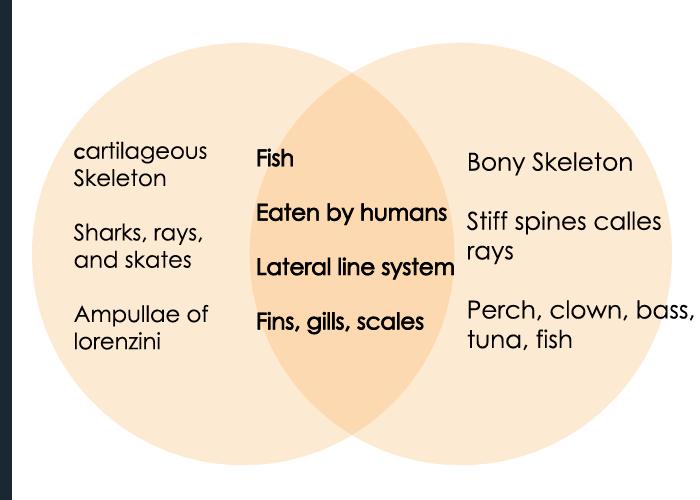 chondrichthyes vs osteichthyes